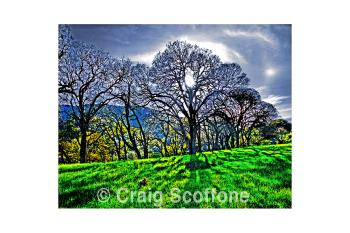 Shannon RD2 107, art for sale online by Craig Scoffone