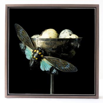 Cicada and Quail Eggs, art for sale online by Curtis Speer