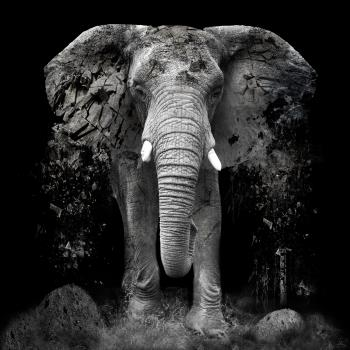 The Disappearance of the Elephant , art for sale online by Erik Brede