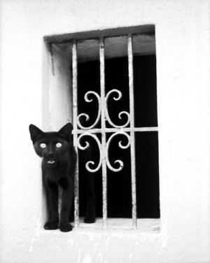 Black cat in old window, art for sale online by Juan Borja