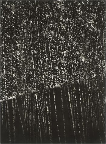 The White Forest artwork by Robert Kipniss