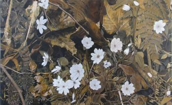 Hepatica in situ, art for sale online by HM Levan
