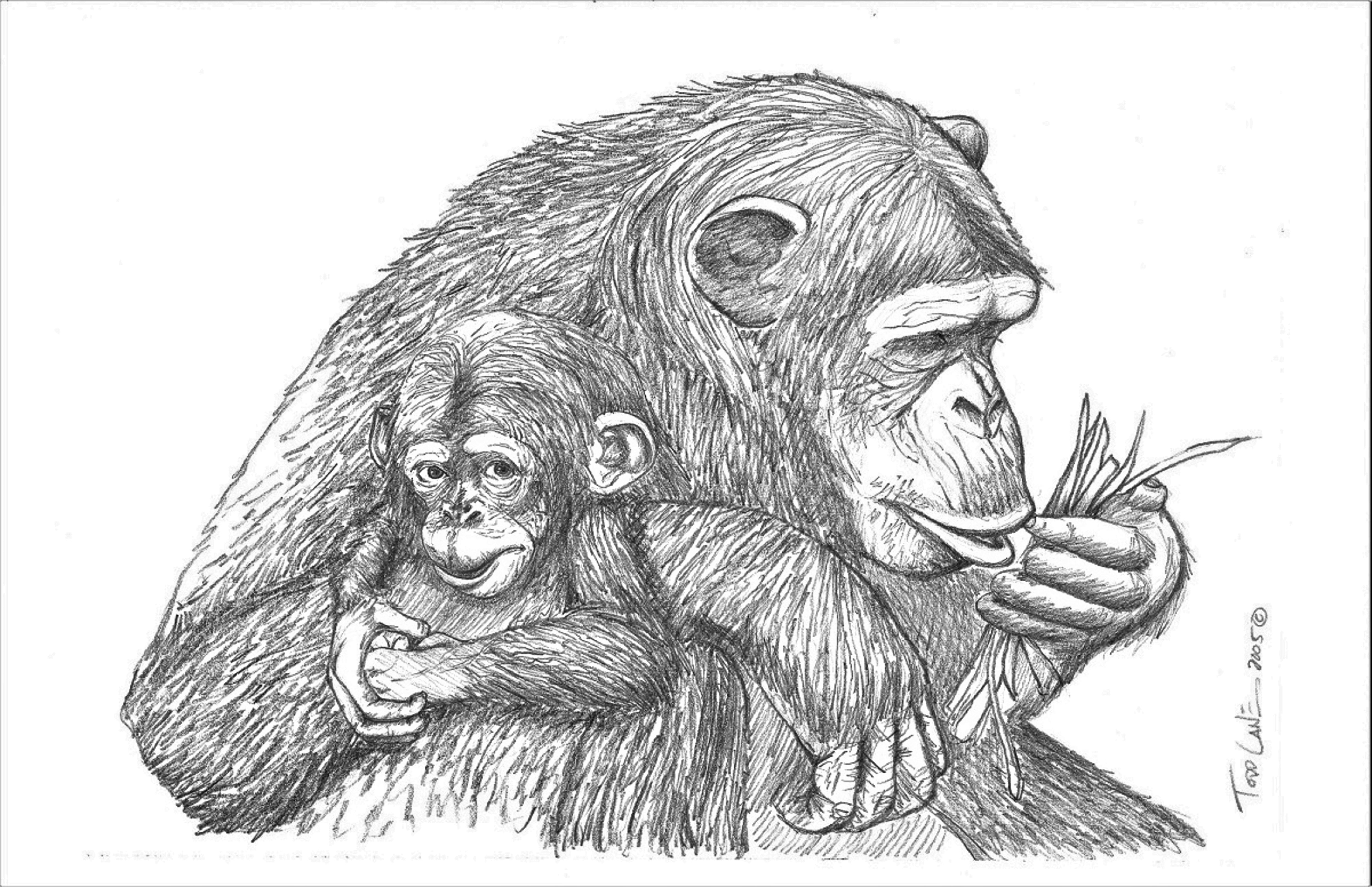 Mother and Baby Chimpanzees Kenya Series Image 1 artwork by Todd Lane - art listed for sale on Artplode