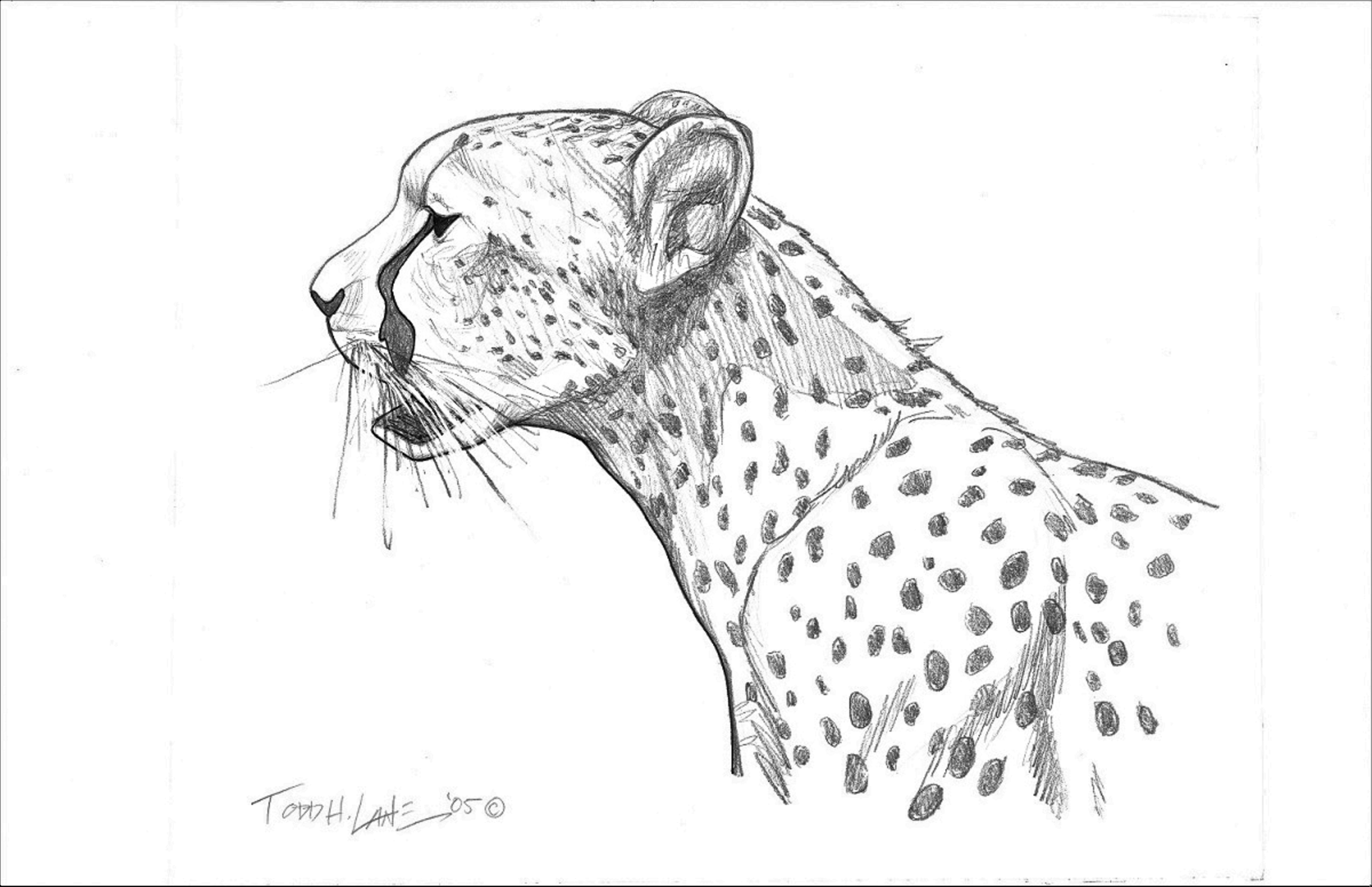 Duma Kenya Series Image 2 artwork by Todd Lane - art listed for sale on Artplode