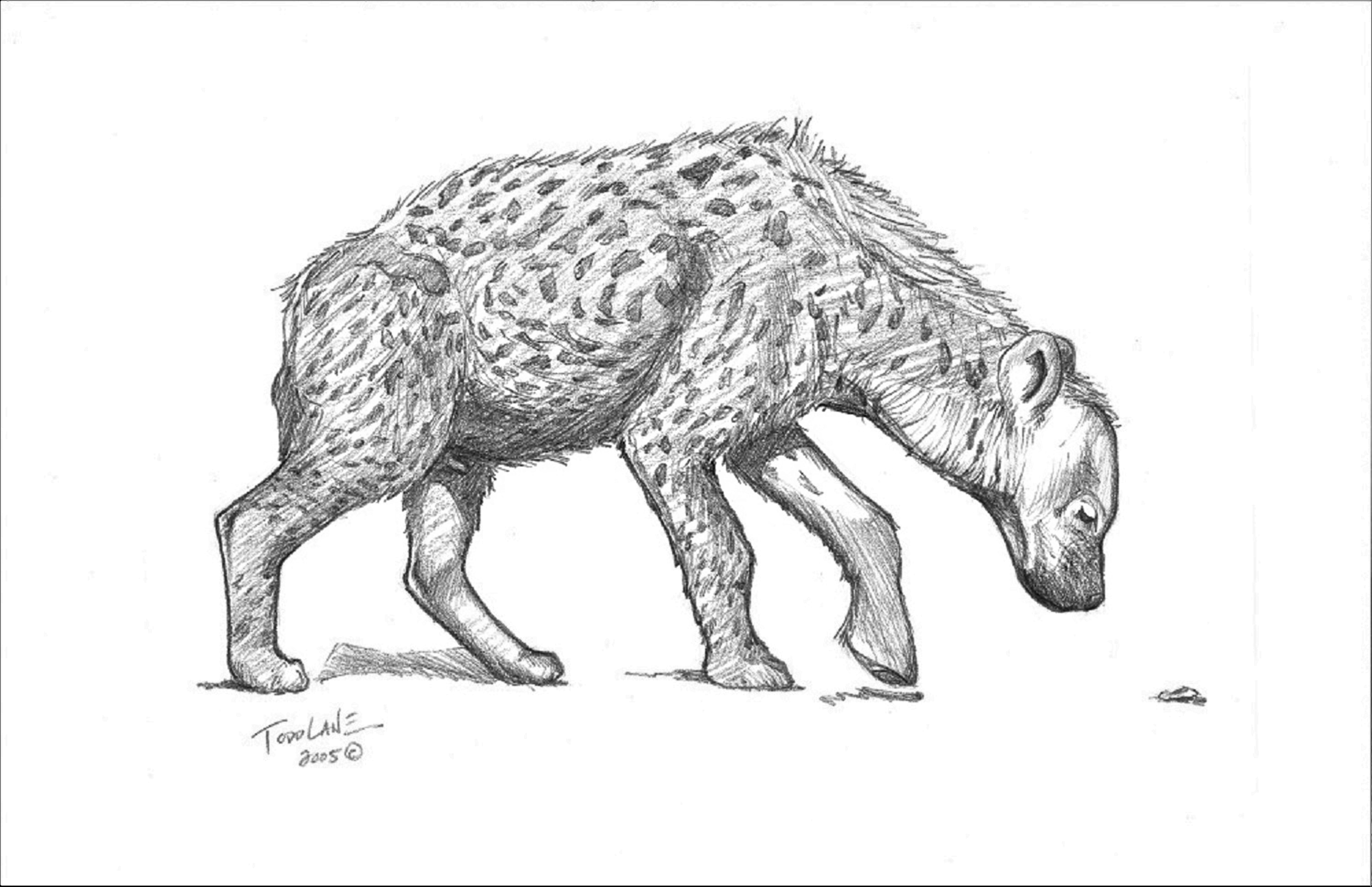 The Investigator Kenya Series Image 4 artwork by Todd Lane - art listed for sale on Artplode
