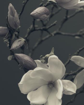 Magnolia No1 artwork by Pete Hollow