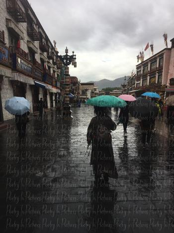 Lhasa Umbrellas, art for sale online by Tracy Brown