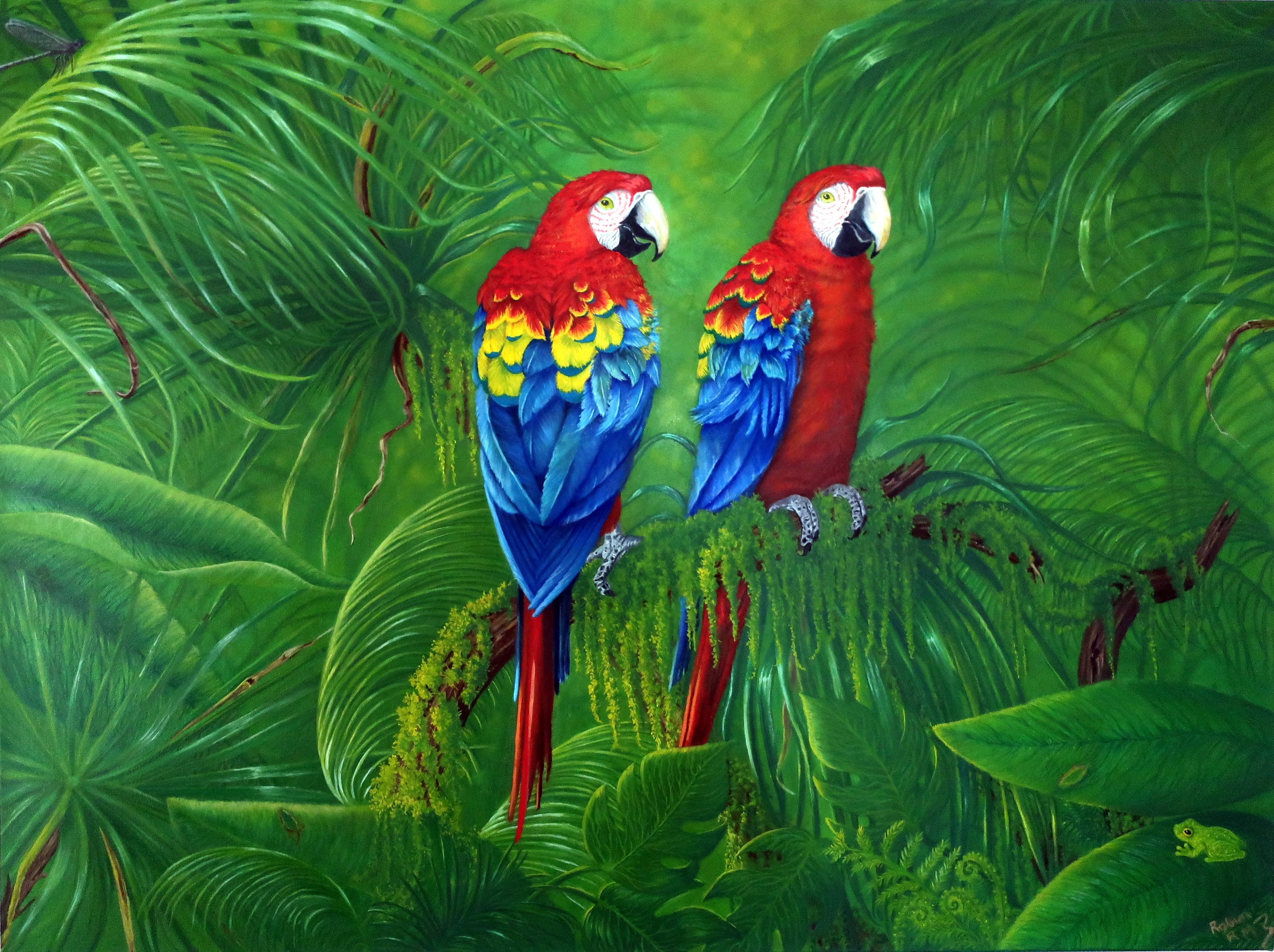 Macaws artwork by Robin McIntyre - art listed for sale on Artplode