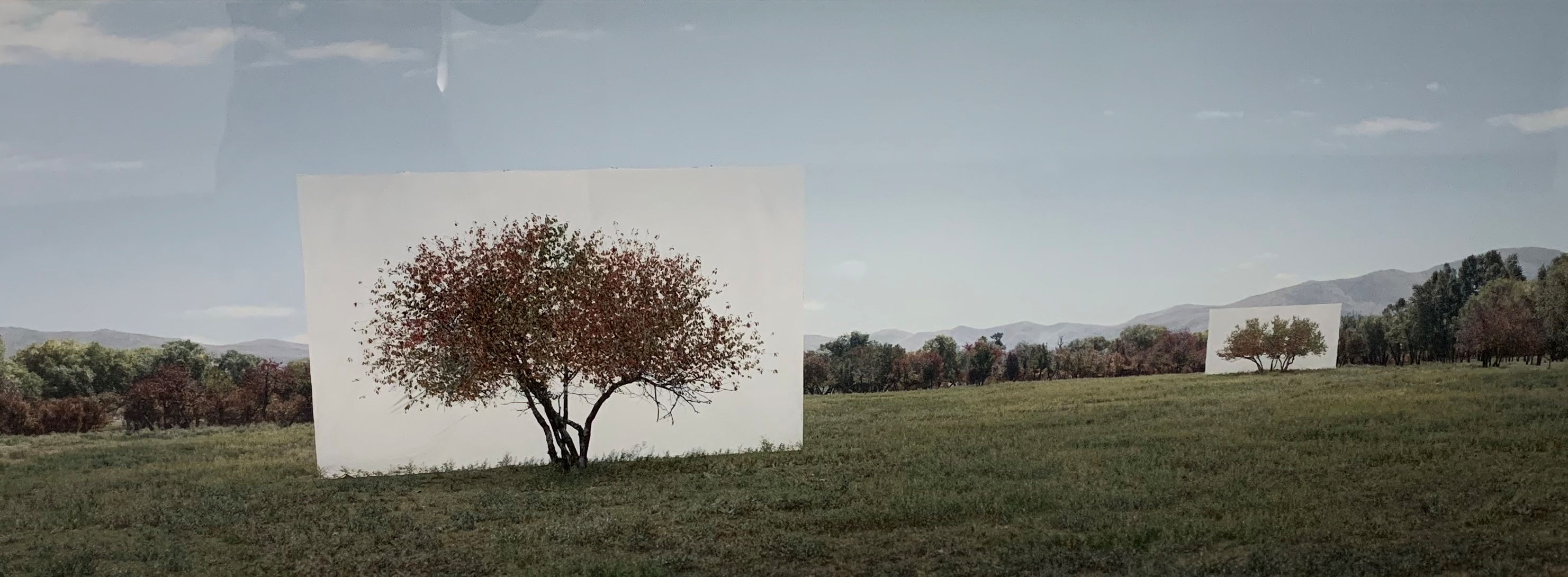Tree No 7 artwork by Myoung Ho Lee - art listed for sale on Artplode