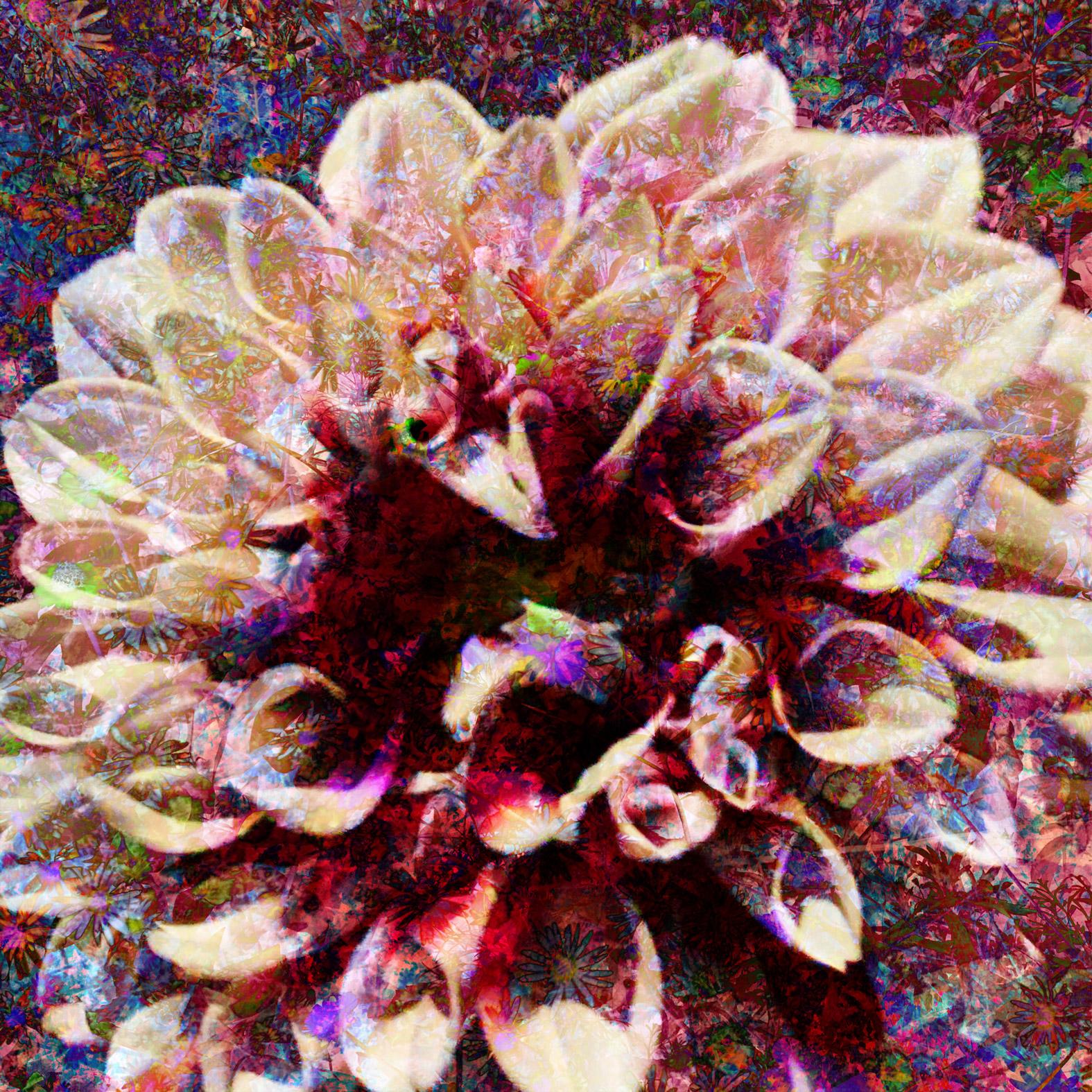 Rosa artwork by Aristo Vopenka - art listed for sale on Artplode