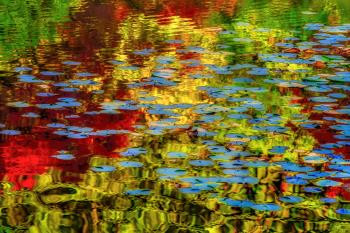 Lily Pond 1, art for sale online by Tim Thompson