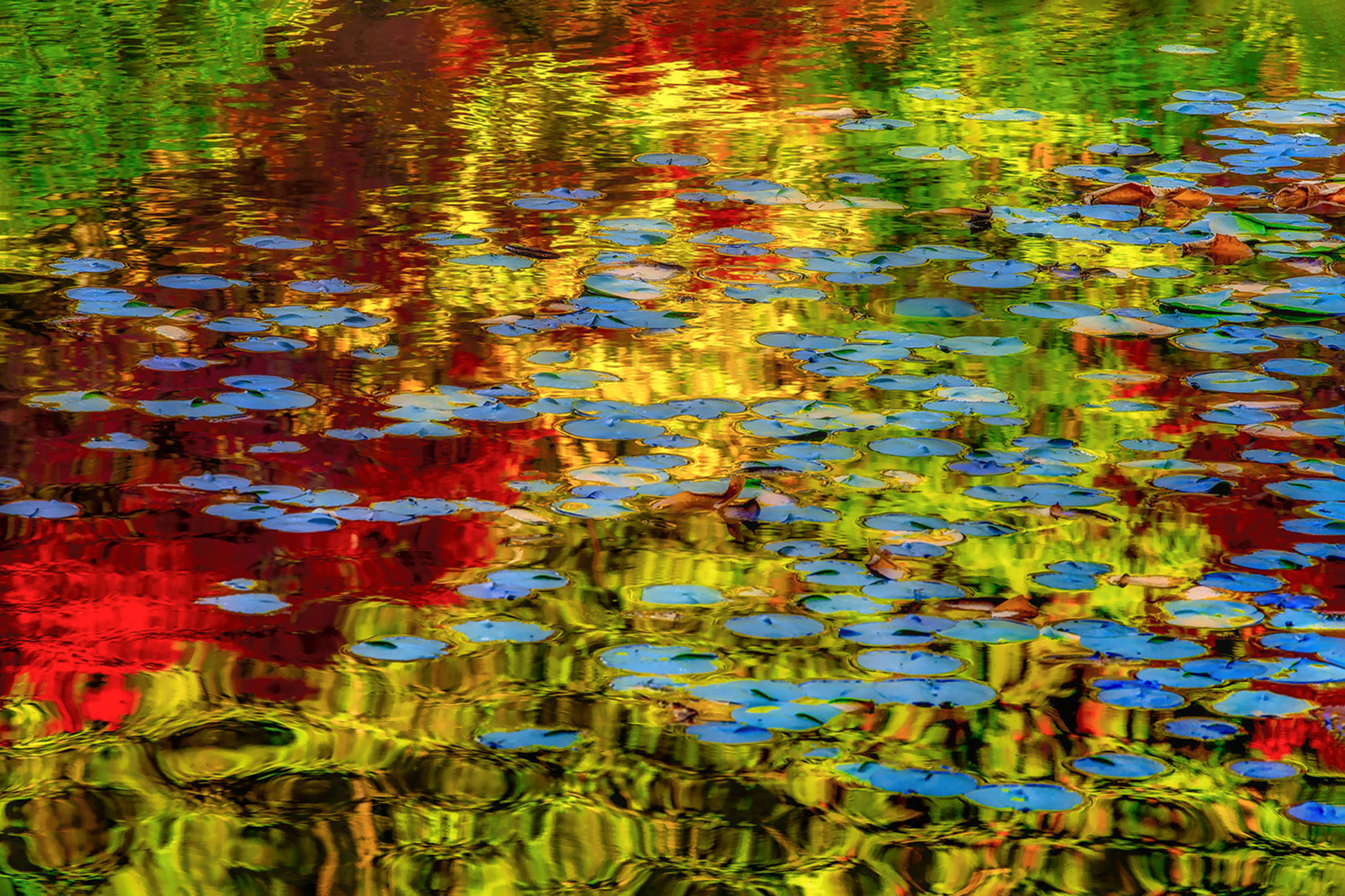 Lily Pond 1 artwork by Tim Thompson - art listed for sale on Artplode