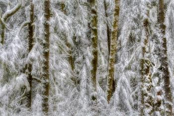 Snowscape, art for sale online by Tim Thompson