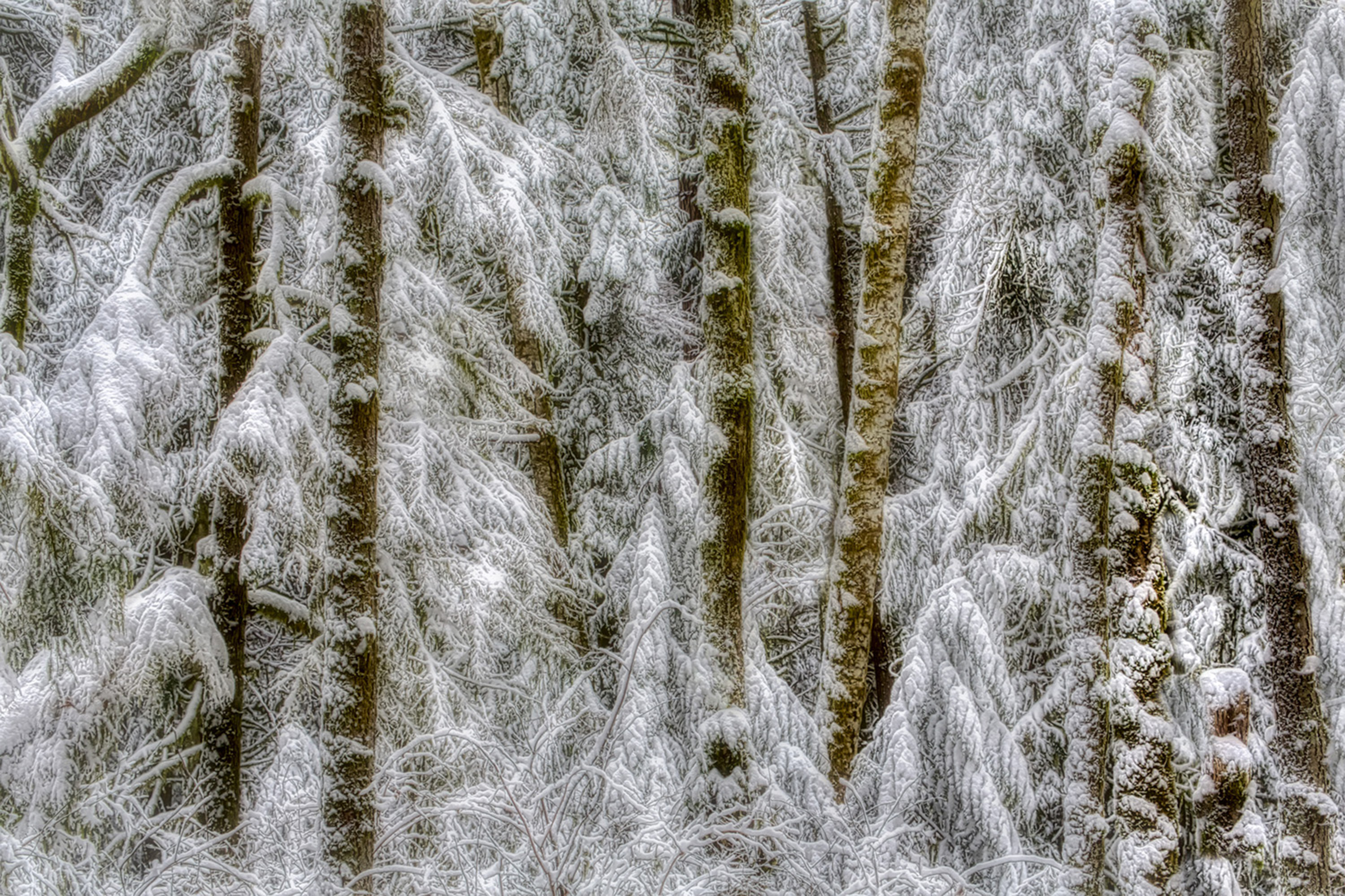 Snowscape artwork by Tim Thompson - art listed for sale on Artplode