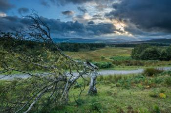 Sunset with Broken Tree Longshaw Estate Peak District, art for sale online by Adrian Van Heerden